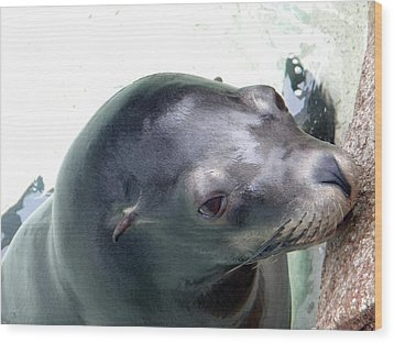 Wood Print featuring the photograph See Me Seal by Amanda Eberly-Kudamik
