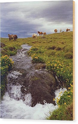 Wood Print featuring the photograph See The Pretty Horses by Debra Kaye McKrill