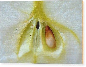 Seed Wood Print