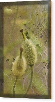 Wood Print featuring the photograph Seed Pods - Meconopsis Paniculata by Liz  Alderdice