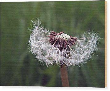 Seeds And Stems Wood Print