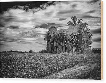 Seen Better Days Wood Print by Jeff Burton