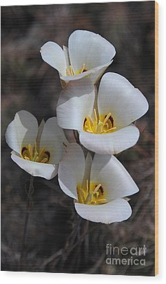 Sego Lily Wood Print by Vivian Christopher