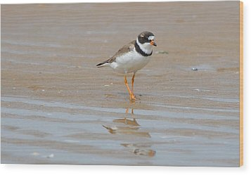 Semipalmated Plover Wood Print by James Petersen