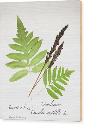 Sensitive Fern  Wood Print