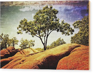 Sentinal Tree Wood Print by Marty Koch