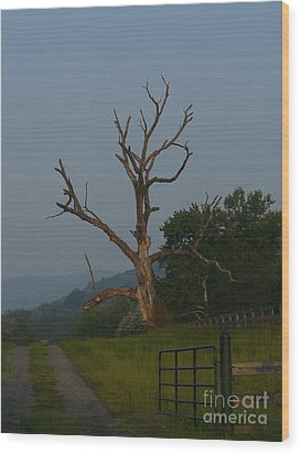 Wood Print featuring the photograph Sentinel by Jane Ford