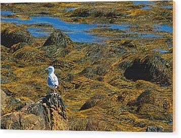 Wood Print featuring the photograph Sentinel Seagull by Nancy De Flon