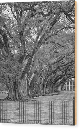 Sentinels Monochrome Wood Print by Steve Harrington