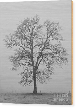 Sentry Oak Wood Print by Chuck Flewelling