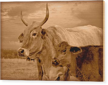 Wood Print featuring the photograph Sepia Cows 4 by Amanda Vouglas