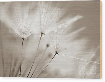 Sepia Dandelion Clock And Water Droplets Wood Print by Natalie Kinnear