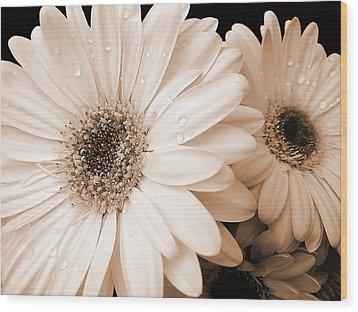 Sepia Gerber Daisy Flowers Wood Print by Jennie Marie Schell