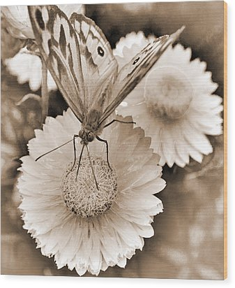 Sepia Monarch Butterfly On Paper Daisy Wood Print by Patrick OConnell