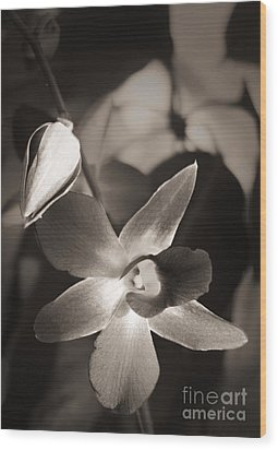 Wood Print featuring the photograph Sepia Orchid by Ellen Cotton
