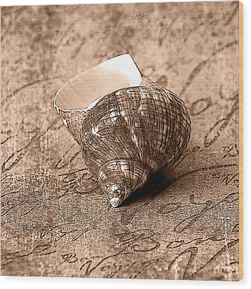 Sepia Seashell Wood Print by Karen Stephenson