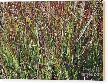 September Grasses By Jrr Wood Print by First Star Art