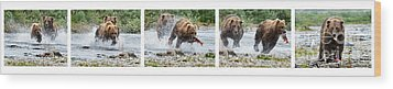 Sequence Of Large Brown Stealing Salmon From Smaller Brown Bear Wood Print by Dan Friend