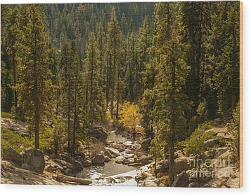 Sequoia National Park  1-7832 Wood Print