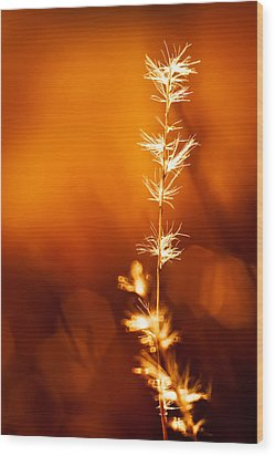 Wood Print featuring the photograph Serene by Darryl Dalton