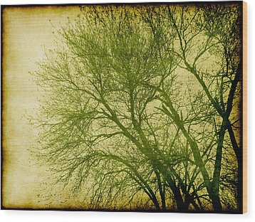 Serene Green 1 Wood Print by Wendy J St Christopher