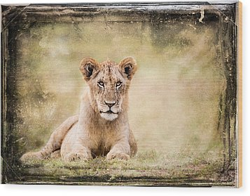 Wood Print featuring the photograph Serene Lioness by Mike Gaudaur