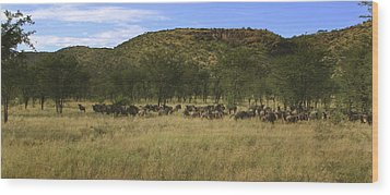 Wood Print featuring the photograph Serengeti by Joseph G Holland