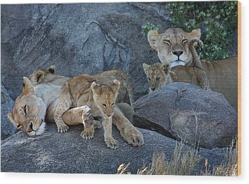 Serengeti Pride Wood Print