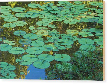 Wood Print featuring the photograph Serenity Found - Green Lotus Leaves In Blue Water by Jane Eleanor Nicholas