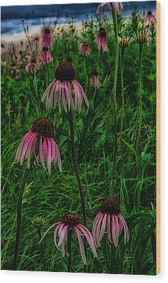Wood Print featuring the photograph Serious Coneflowers by Kimberleigh Ladd