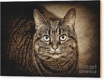 Serious Tabby Cat Wood Print by Andee Design