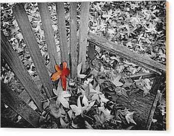 Set Apart Wood Print by Bonnie Bruno