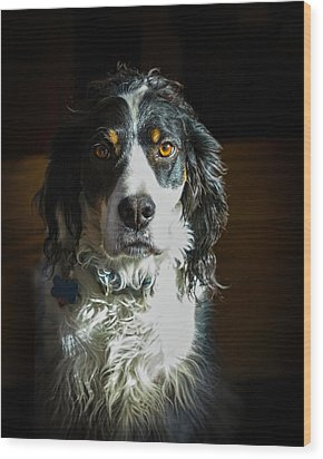 Setter In Contrast Wood Print by Andrew Lawlor