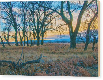 Setting Sun At Rocky Mountain Arsenal_1 Wood Print by Tom Potter