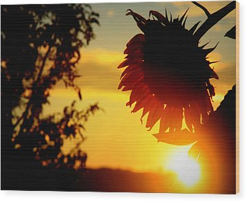 Wood Print featuring the photograph Setting Sunflower by Aurelio Zucco