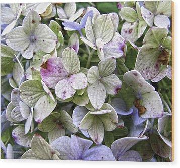 Shabby Hydrangea Wood Print by Rose  Fleming