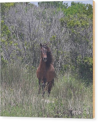 Shackleford Pony Wood Print