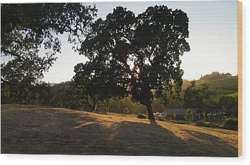 Wood Print featuring the photograph Shade Tree  by Shawn Marlow