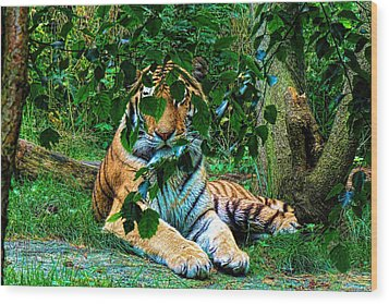 Wood Print featuring the photograph Shaded Stripes by Glenn Feron