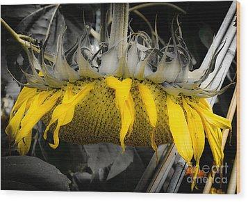 Shaded Sunflower Wood Print