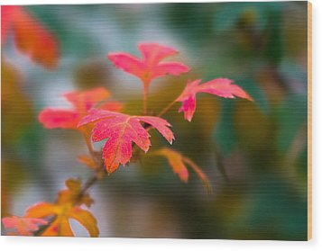 Shades Of Autumn - Red Leaves Wood Print by Alexander Senin