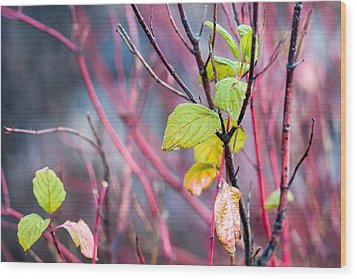 Shades Of Autumn - Reds And Greens Wood Print by Alexander Senin