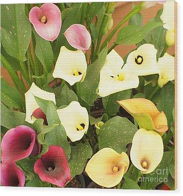 Shades Of Calla Lilies Wood Print