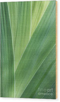 Wood Print featuring the photograph Shades Of Green #2 by Judy Whitton