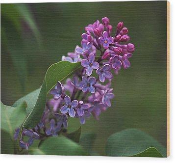 Shades Of Lilac  Wood Print by Rona Black