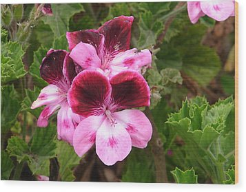 Wood Print featuring the photograph Shades Of Pink by Lew Davis