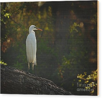 Shadow Heron Wood Print