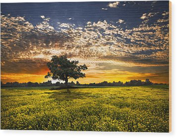 Shadows At Sunset Wood Print by Debra and Dave Vanderlaan