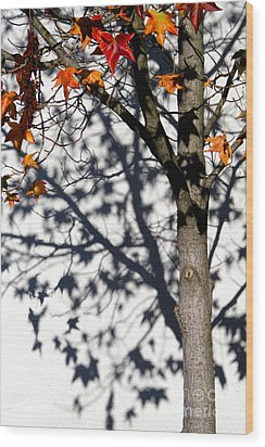 Wood Print featuring the photograph Shadows Of Fall by CML Brown