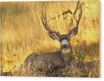 Wood Print featuring the photograph Shady Buck by Aaron Whittemore
